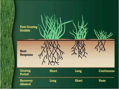 grass-diagram